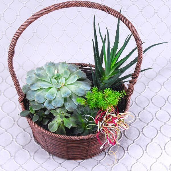 Succulents in a Basket