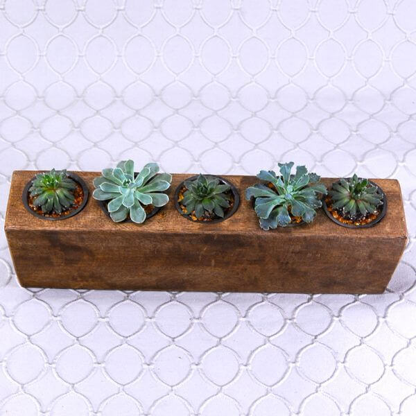 Succulent in Cups Collection