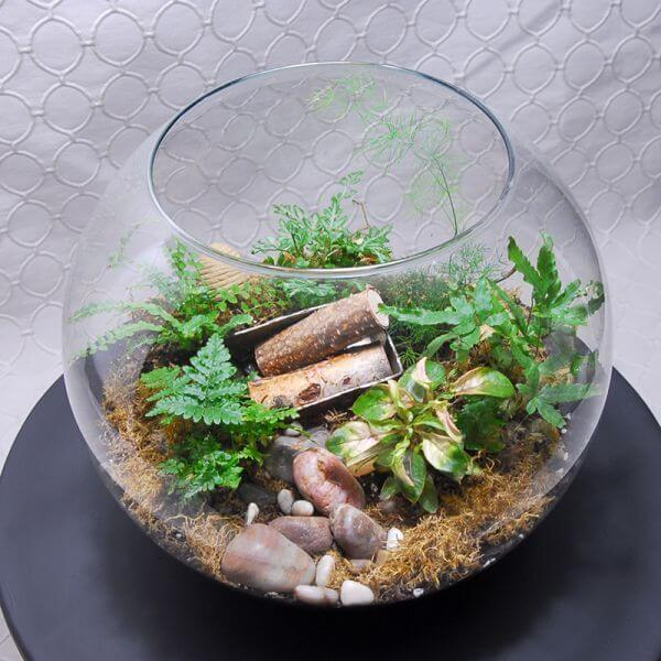 Terrarium in a Glass Bowl.